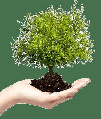 abena_ekologia
